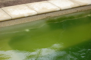 The effect of bushing the algae off the pool wall. On the left, brushed. On the right, not brushed. Notice how much green can stick to the surface of the pool.